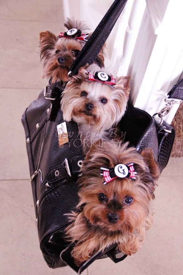 3 Yorkshire Terrier Dog Carrier Bond Girl Smuggler De-LUXE