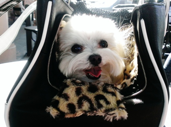 Te Quiero Chihuahua Rescue Me Tote with a Maltese